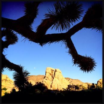 Joshua Tree, Hidden Valley, rock climbing joshua tree, jtree rock climbing, the cathouse joshua tree, the eye joshua tree, the bong joshua tree